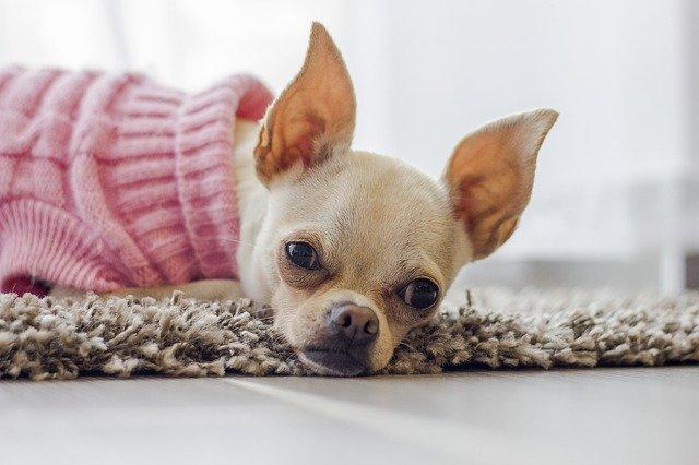 הכירו את רשת יונימל: כי גם בעלי החיים צריכים לשמור על סטייל!